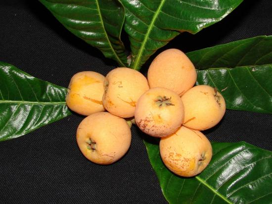 nefles-petits-fruits-oublies-L-y95qjH